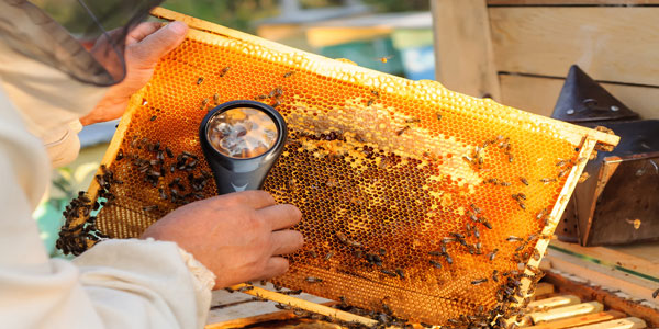 How to find the right wire for beehives and beekeeper equipment
